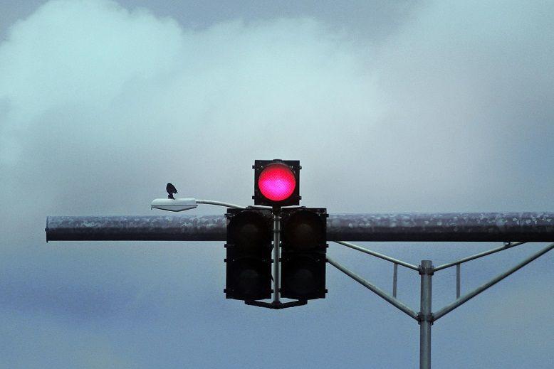 semáforo en rojo encima de una barra horizontal con un pájaro y cielo gris